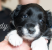 Pups-01